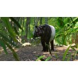 ESD Planet Zoo Southeast Asia Animal Pack